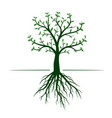 green tree with leaves and roots on white vector image