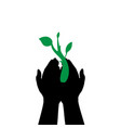 hands hold plant sprout day ecology vector image