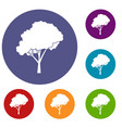 tree with a rounded crown icons set vector image vector image