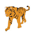 a tiger that stands drawing vector image vector image