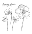 Anemone sylvestris flowerrs sketches set vector image vector image