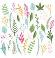 herbs and leaves collection vector image vector image