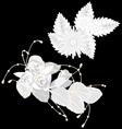 White flowers isolated on black vector image vector image