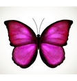 Bright Pink Butterfly vector image vector image