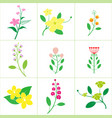 set of cute flower vector image